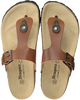 Cognac BRAQEEZ Slippers SEF SPAIN  - small