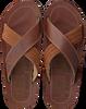 Cognac PME Slippers HAIG  - small