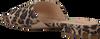 Bruine NOTRE-V Slippers 41167  - small