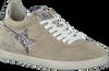 Beige ASH Sneakers GUEPARD  - small