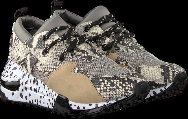 Beige STEVE MADDEN Sneakers CLIFF SNEAKER  - large