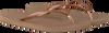 Roségouden HAVAIANAS Slippers SLIM WOMEN - small
