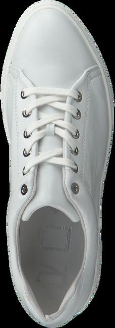 Witte ROBERTO D'ANGELO Sneakers VANATU  - large