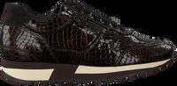 Bruine HASSIA Lage sneakers MADRID  - medium