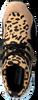 Bruine STEVE MADDEN Sneakers CLIFF SNEAKER - small