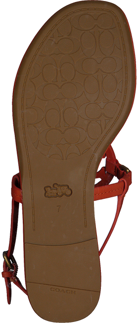 Oranje COACH Sandalen JERI LEATHER SANDAL  - large