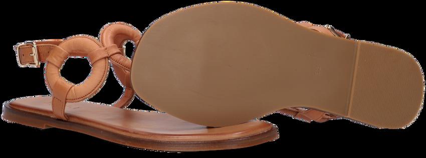 Bruine NOTRE-V Sandalen 799003  - larger