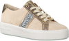 MICHAEL KORS SNEAKERS POPPY STRIPE LACE UP - small